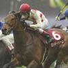 【阪神牝馬ステークス2018】予想オッズ・出走馬分析〜リスグラシュー重賞2連勝なるか