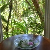 花魁草(オイランソウ)のモイスト・ポプリとベルローズのバラその後
