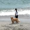 海岸を散歩したい