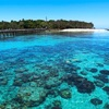 海のお宝 -サンゴ-