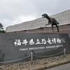 国内ひとり旅④ ~「福井県立恐竜博物館」編~