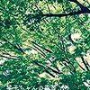 「琴子ちゃんの風景-07(終)」楢﨑古都