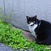 猫写真の手軽さと難しさ