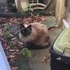 【エムPの昨日夢叶(ゆめかな)】第684回 『ボス猫が新年の挨拶にやってきた。これぞ!招き猫=縁起良しで夢叶なのだ!?』 [1月1日]