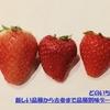 いちごの品種別の味の違いとランキング【人気の苺品種が集結!】