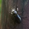 カブト虫もクワガタもカナブンもゴキブリにしか見えない話