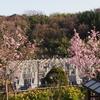 霊園風景その24 「‥‥春めく風景」