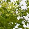 ジィちゃんと探鳥・丸火自然公園&丹沢の野鳥/2019-5-16