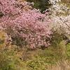 一日一撮 vol.194 桜じゃなくても花が綺麗ならメデタイ