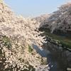 桜便りと近況