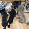 「マダム倶楽部」活動報告 我が家の犬に癒されたので、ウォーキング頑張ろう!! 1月16日