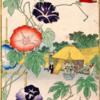 有毒植物⑦ アサガオ(有毒部位:種)