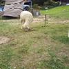 2018夏休みに六甲山カンツリーハウスの動物ふれあい村に行ってきました