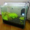 オキシドール+点灯時間の減少で、糸状藻も減少
