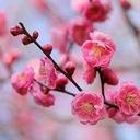 桜木梅子のブログ
