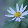 秋に咲く花の運命