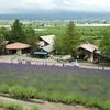 静岡発 観光モデルコース(3泊4日 北海道層雲峡・富良野・夕張方面)