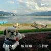 ランステ利用で観光地ラン【諏訪湖一周ジョギング】