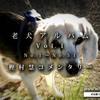 【老犬】老犬アルバムVol.1:樫村慧コメンタリー Complete  ~これからが可愛さの本番なんだよ!~
