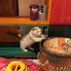 猫スタッフちゃんの日常♡
