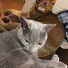猫さん快適化計画~その後の猫草さん~