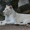 The Bonanza Exotic Zoo カオヤイの動物園