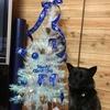 クリスマスパーティ2017〜甲斐犬サンのホステスの巻٩( 'ω' )و