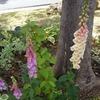 牧野植物園 開花中のお花