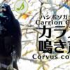 ハシボソガラスの鳴き声【野鳥図鑑・鳴き声図鑑】Corvus corone