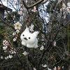 梅 桜 猫