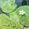 植物好きの遊園地「オザキフラワーワールド」夏の再訪