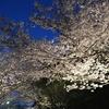 子連れも楽しい敦盛桜「須磨浦公園」@神戸市須磨区