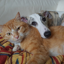 犬猫外人ブログ