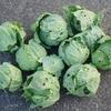 「無農薬で野菜育てるのムズすぎ!!!!」初心者がはじめて野菜を育てて気づいたこと
