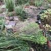 台風後の庭
