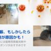 猫の食欲不振、もしかしたら食器洗剤が原因かも!食欲がない猫には猫専用食器洗剤や洗剤不要のスポンジがおすすめです