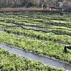大王わび農場は八面大王伝説が残る神秘の地だった。