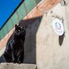 サン・ジミニャーノの猫