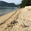 3回目の うさぎ島 (大久野島)予約、広島空港から、夜の大久野島