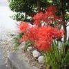 【季節の花】 彼岸花のビュープレイスIN伊勢②