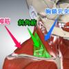 COPDで胸鎖乳突筋が発達する理由