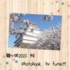 【スマホでフォトブック風加工】2021年会津鶴ヶ城の桜写真まとめ🌸