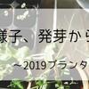 水菜の様子、発芽から間引き~2019プランター栽培2~