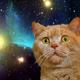 私の短編猫小説-3「あなたの家に猫がやってきた理由」