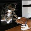 ついに猫(953万匹)が犬の飼育数(892万匹)を調査開始以来初めて上回る!!再逆転は不可能なのか!?