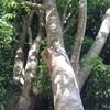 「木強」の気質
