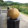 9月14日(ブドウ収穫・出荷準備)