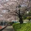 蛇崩川緑道で花見散歩