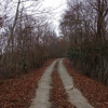 白六山の林道を上る
