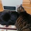 ヒーターを陣取る猫たち